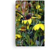 Red Admiral Butterfly on yellow daisy flowers Canvas Print