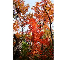 Fall Colours Photographic Print