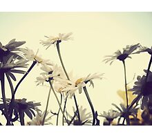 Summer Chamomiles 4 Photographic Print