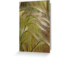 Indiangrass Swaying Softly In The Wind Greeting Card