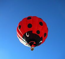 giant lady bug by Fran E.