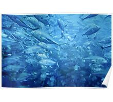 Fish Schooling Harmonious Patterns Throughout The Sea Poster