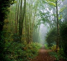 Arnos Vale by Alan Watt