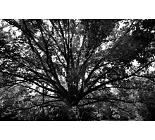Spreading Branches Photographic Print
