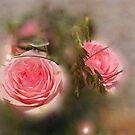 Hidden Beauties by Rosy Kueng