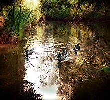 Grym's Dyke Duck Pond by A90Six