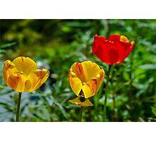 Springtime In Alaska Photographic Print