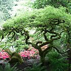 Japanese Buchart Garden  by Melissa Coulter