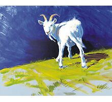 Strike A Pose - Amusing Acrylic Goat Painting Photographic Print