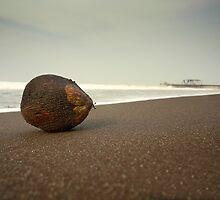 Coconut by Freddy Murphy