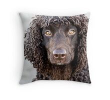 Irish Water Spaniel Throw Pillow