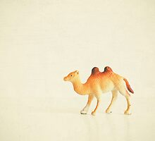Cunning Camel by Cassia