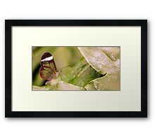 Clear 'Glasswing' Tropical Butterfly Framed Print