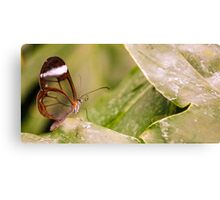 Clear 'Glasswing' Tropical Butterfly Canvas Print