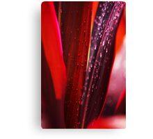 Red Leaves. Macro Canvas Print