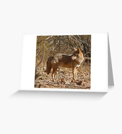 About Time for Dinner Greeting Card