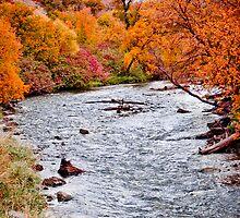 A Stream Of Trees by Daniel Amezcua