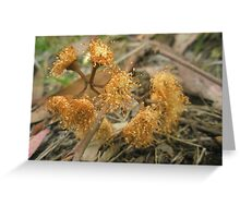 Rust Coloured Beauty Greeting Card