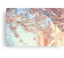Pink Touch of Softness. Pink Spring in Amsterdam Canvas Print