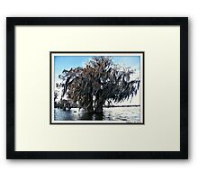 Double Cypress Framed Print