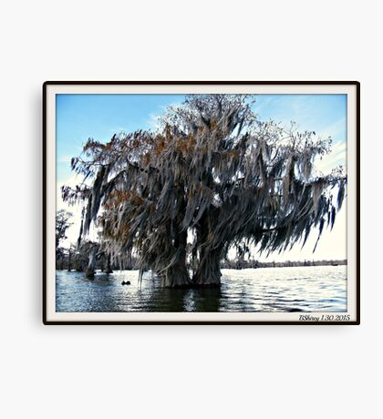 Double Cypress Canvas Print