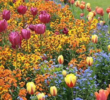 Sweeping Flower Beds of Colour by Lucy Hollis