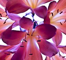 Purple Love. by Andrew Bosman