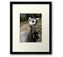 Furry Stripey Nomad Framed Print