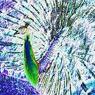 groovy bird by dannielle