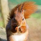 Fern The Red Squirrel by Susie Peek