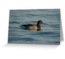 Light-bellied Brent Goose Greeting Card