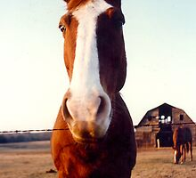 Why the Long Face? by Sheila Simpson