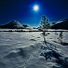 Cold moon by Frank Olsen