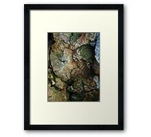 Remnants from the Black Forest Framed Print