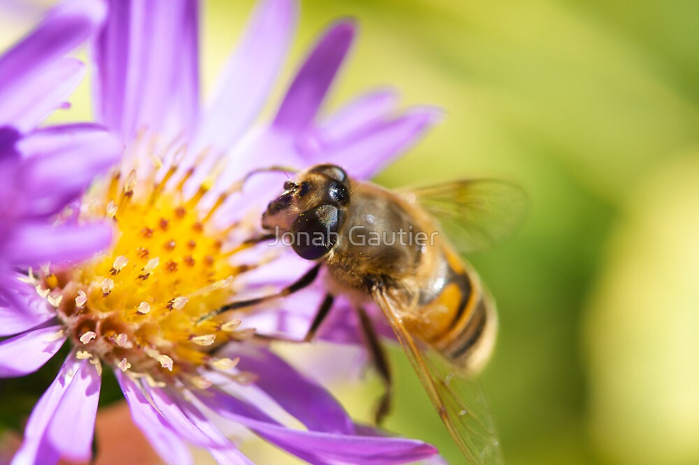 Drone Fly on Aster by Jonah Gautier