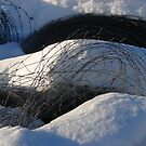 Fencing Wire in the Snow by Diane Petker