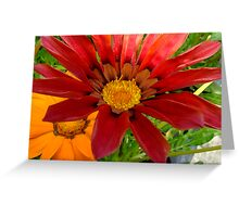 Orange and Gold Greeting Card