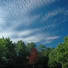 Pillow Clouds by Paul Gitto