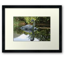 Is this really Nessy ????? Framed Print