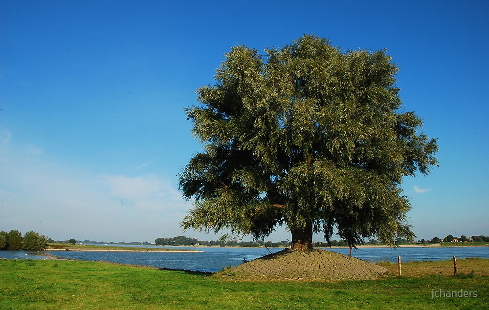 The old tree and the river by jchanders