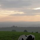 Horse Dusk over Derry Ireland by mikequigley