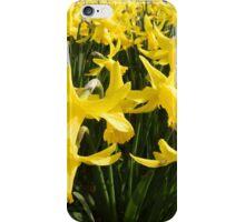 Daffodils 1 by Amber Feng Shui Art iPhone Case/Skin