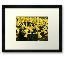 Daffodils 1 by Amber Feng Shui Art Framed Print