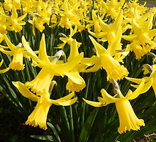 Daffodils 1 by Amber Feng Shui Art by Amber Feng Shui Art