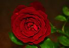 Rose Red by Evita