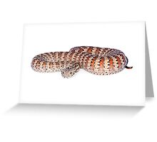 Common Death Adder (Acanthophis antarcticus) Greeting Card