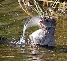 Bath Time by lloydsjourney