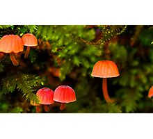 Mother Nature's night lights Photographic Print