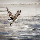American Bald Eagle With A Fish 4 by Thomas Young