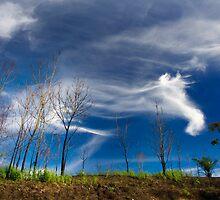 Beautiful Sky by Steven  Siow